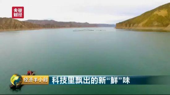 """震惊!2600米高原产出三文鱼 青藏高原""""承包""""了国内1/3的市场"""