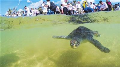 中国海龟保护联盟昨日在三亚成立