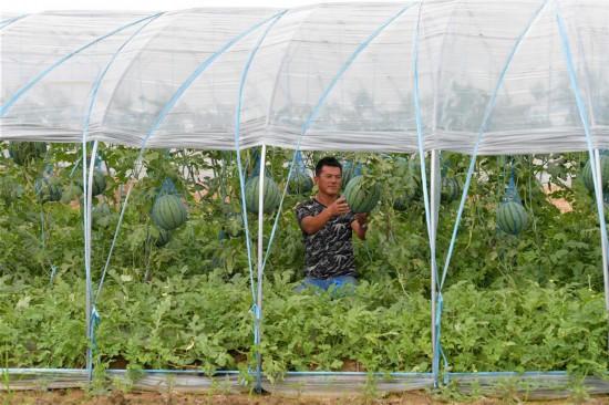(经济)(1)现代设施农业助力农民致富增收