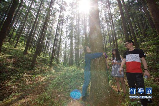 (经济)(5)福建洋口林场:深山里的中国杉木种质资源库
