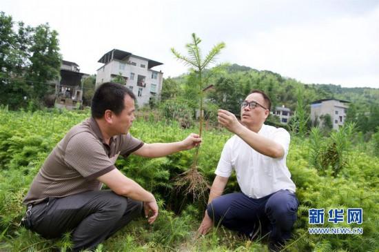 (经济)(4)福建洋口林场:深山里的中国杉木种质资源库