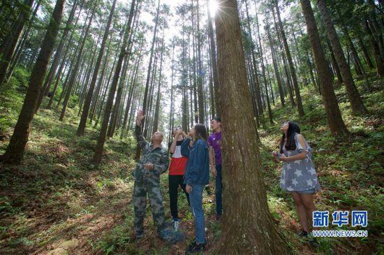 (经济)(2)福建洋口林场:深山里的中国杉木种质资源库