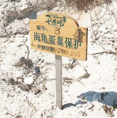 渔民黄宏波:我在三沙护海龟