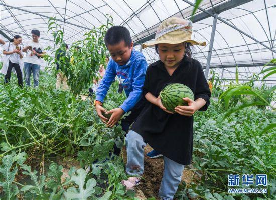 """(经济)(1)""""农园新景""""助力乡村旅游产业"""