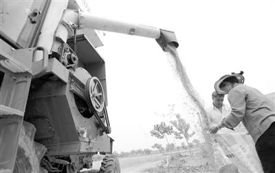 我国多个小麦产区开镰收割