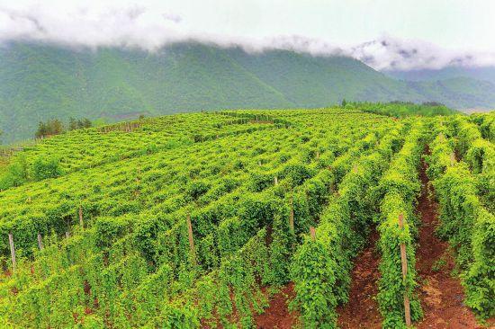 白山市大力发展生态效益型特色农业