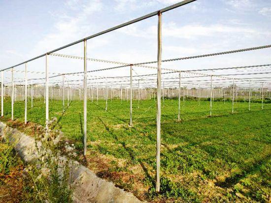 泰州上膳源300亩耕地轮作休耕 推进可持续发展