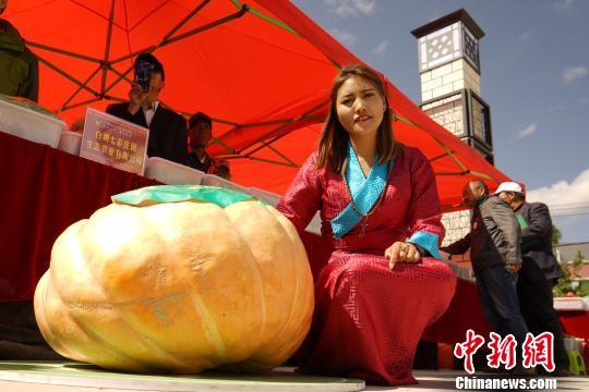 """果蔬多达136种西藏白朗县变成""""百果园"""""""