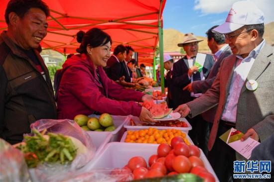 """(经济)(1)西藏白朗""""田园超市""""迎来采摘季"""