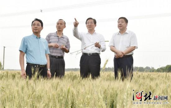 6月3日,省委书记、省人大常委会主任王东峰到保定市调研检查。这是王东峰在定兴县姚村乡万亩小麦示范方田调研检查。