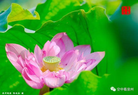 泉州:六月东湖,生如夏花