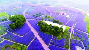 俯瞰宿迁三台山紫色花海 如诗如画蔚为壮观