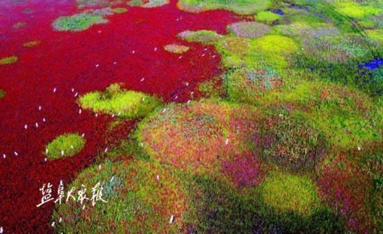盐城黄海湿地已经进入世界遗产审核表决阶段