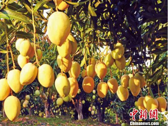 云南丽江借旅游生态优势打造世界一流