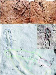 """宜昌发现地球上最古老""""脚印"""" 距今5.5亿年,由一只虾留下"""