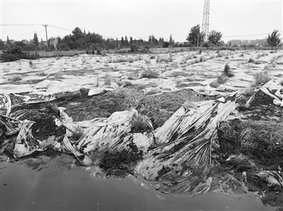 长江边倾倒数万吨污泥,两年时间不仅未整改,堆积量还大幅增加 泰州市整改承诺竟成一