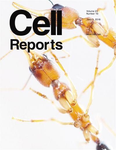 新测序技术 发现蚂蚁重大基因