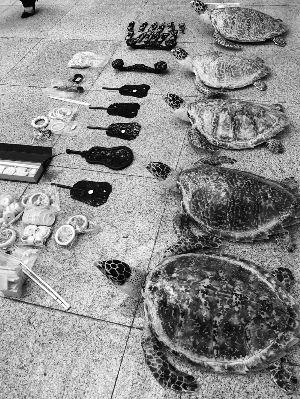 连云港一对夫妻非法买卖玳瑁制品被判刑