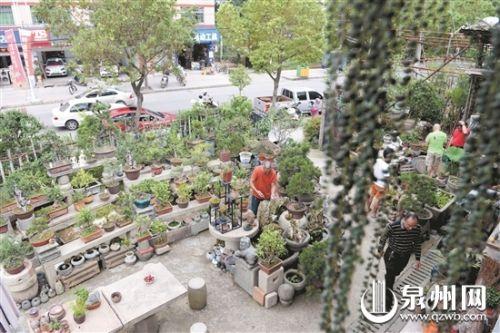 德化县龙浔镇:花农千盆盆栽就地取材 废旧物件也是宝
