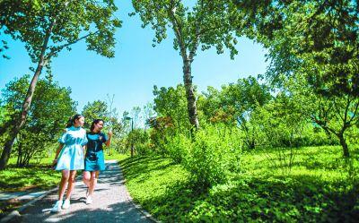 """北京造林:从绿起来美起来到""""活""""起来"""