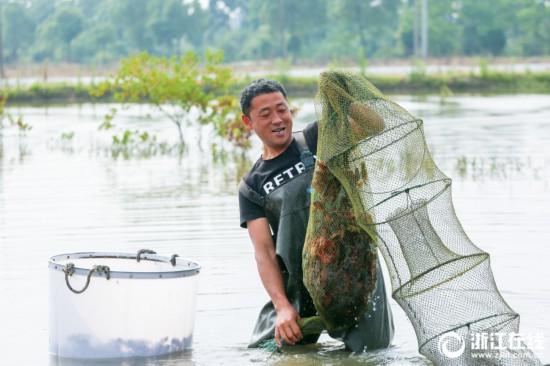 长兴:稻虾轮作 收益猛增