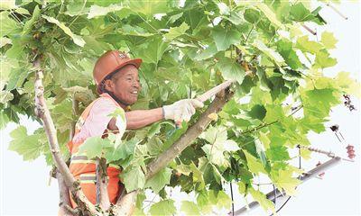 南通海门三百多万平方米绿化进行季节性修剪