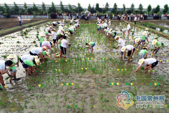 江南运河插秧节