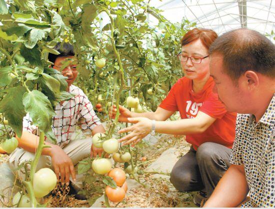 智囊团倾力乡村振兴――记安农大农业科技专家群体