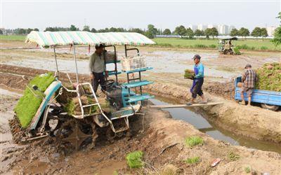 海门七万亩水稻播种基本完成