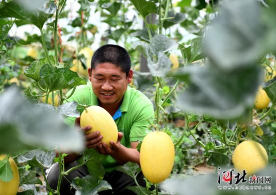 宁晋县:科技推广助力农业提质增效(图)