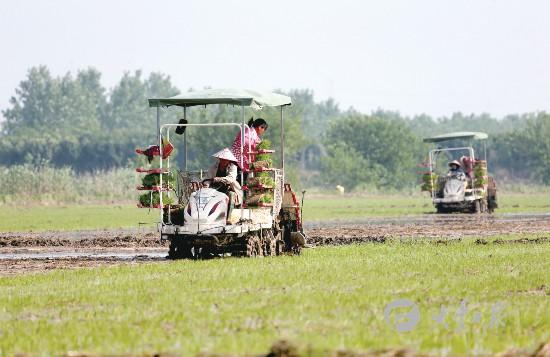 盐城大丰多地成立农机合作社 插秧一条龙服务