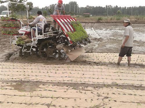 江苏首例秸秆地膜覆盖插秧技术在邳州新河试用