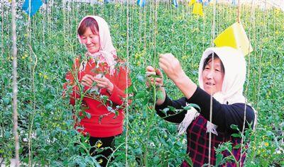 彭阳设施农业标准化生产
