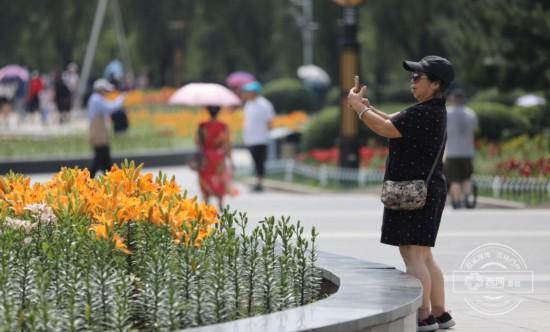 长春又添一赏花好去处 长春公园百合花开了