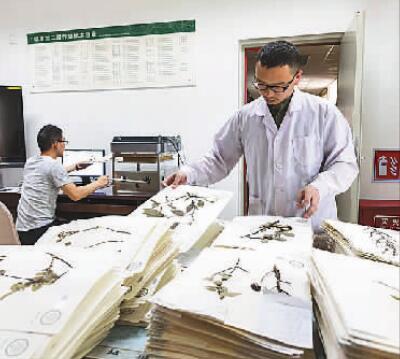 中国数字植物标本馆标本数量超600万