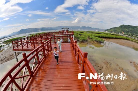 """福州罗源湾红树林栈道正式对外开放 """"近""""享生态美景"""
