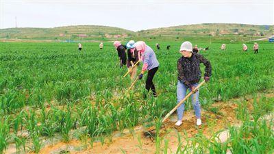 海原小秋杂粮种植面积达35.5万亩