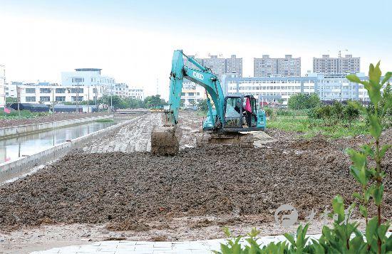 盐城大丰实小西沟两侧绿化工程正有序推进