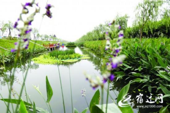 宿迁泗洪:人工湿地 净化尾水