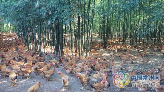 """常州""""动物福利""""养殖法获全球福利养殖最高奖"""