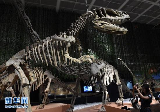 这是7月13日在南京博物院拍摄的恐龙化石展品。   当日,南京博物院称霸侏罗纪我是一只威猛的恐龙特展举行媒体预展。本次展览是为暑期儿童和家庭观众打造的一项科普类亲子展,展出来自四川自贡恐龙博物馆的约50件大型恐龙和伴生动物骨架、恐龙牙齿、恐龙蛋以及相关动植物的化石标本,配以仿真恐龙模型,通过趣味解说和互动活动,向观众介绍恐龙知识。展览将于7月14日正式开展。新华社记者 孙参 摄