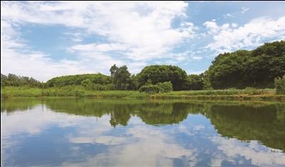 水环境变好 常州两地河塘同时出现桃花水母