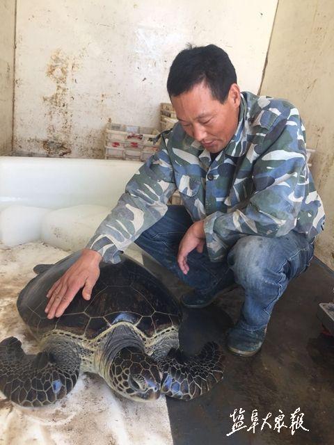 盐城渔民滩涂发现40公斤重海龟 最终放归大海