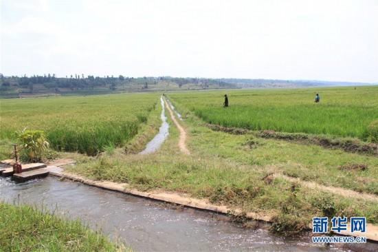 (国际・出访配合)(1)中国企业助力卢旺达农田水利建设