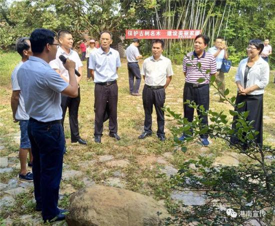 100多名专家到港南区调研古树名木保护管理工作