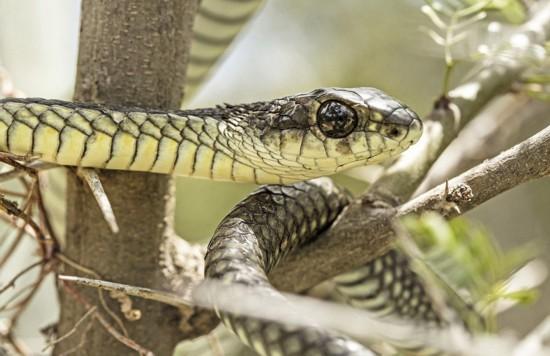 胆大!南非男子冒险拍摄自己在蛇眼中倒影(组图)
