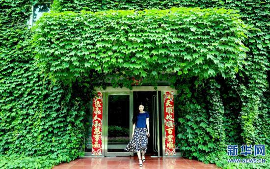 河南洛阳 房子穿上 绿衣服 ,凉快又好看 高清组图