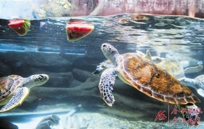 """合肥海洋世界新增科学探索课海洋动物避暑有""""花招"""""""
