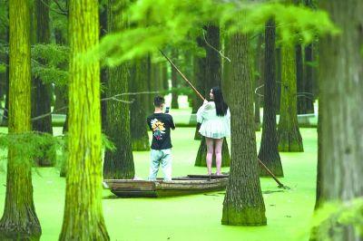 武漢漲渡湖關閉旅游線路 不做網紅守住水上森林生態