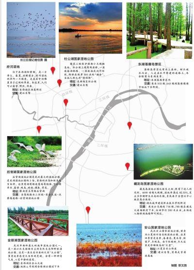涨渡湖水上森林关门谢客 武汉还有多处绝佳湿地美景